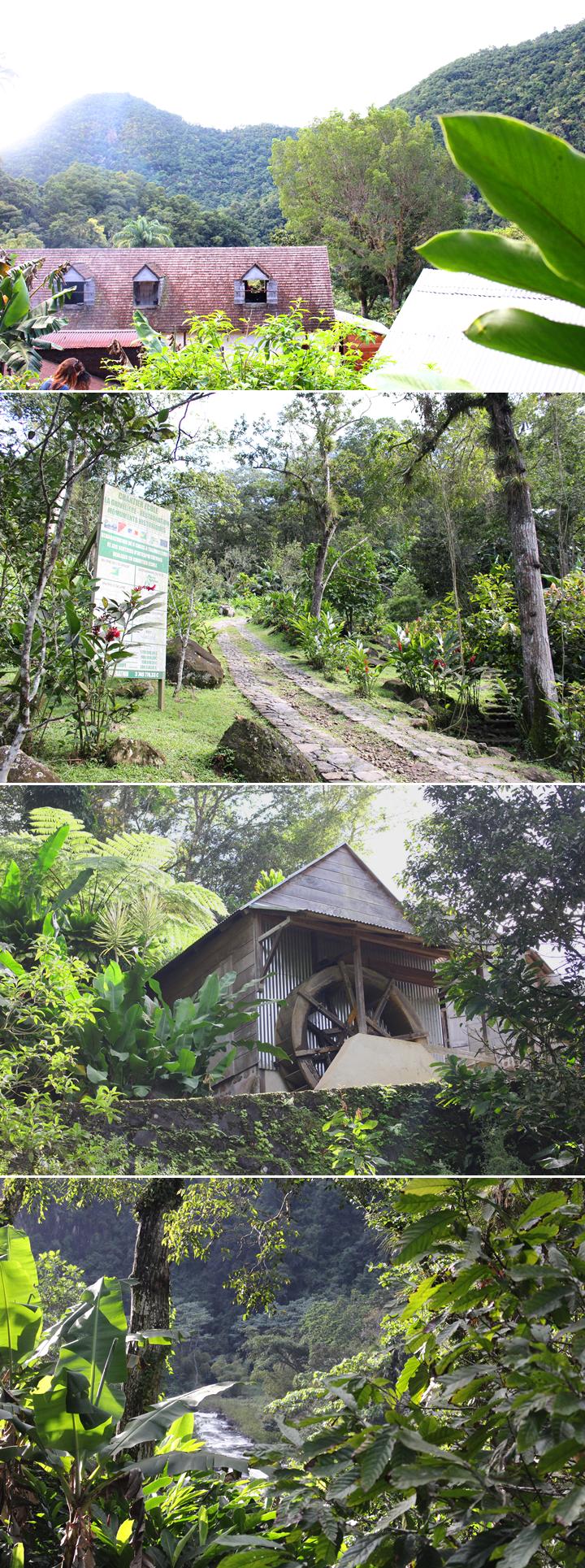 Guadeloupe-Carnet-Voyage-3-Habitation-La-Grivelière-vert